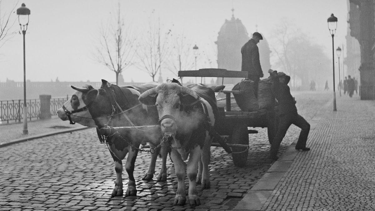 Díky jeho vnukovi znovu ožívají snímky Ferdinanda Bučiny