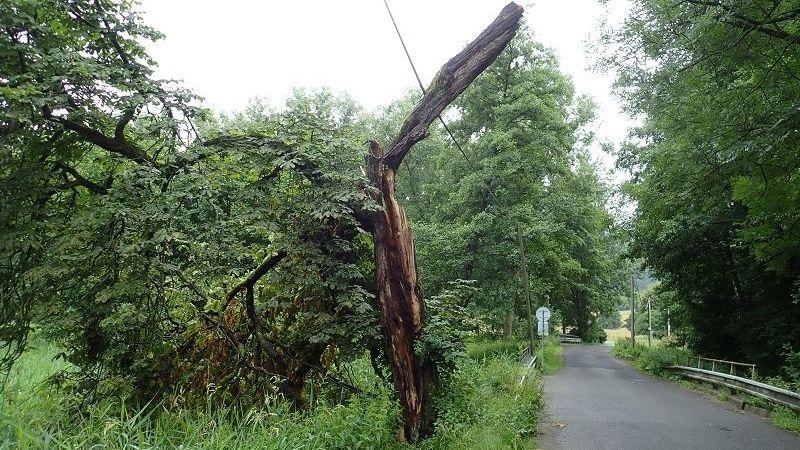 Na Brněnsku zavalil muže strom a těžce ho zranil