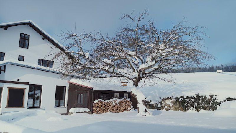 Jabloň u Lidmanů na Náchodsku soutěží o titul Evropský strom roku