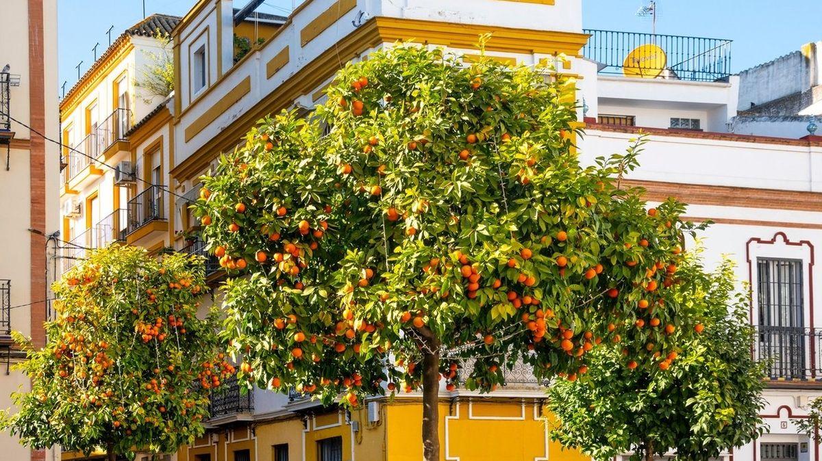 Ve Španělsku budou vyrábět elektřinu z pomerančů