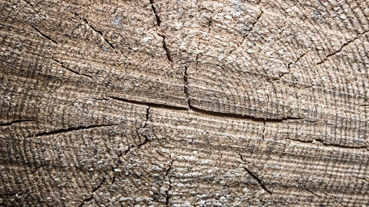 Letokruhy objasňují, jak vichřice narušují lesy. Tornáda ničí stromy i v Evropě