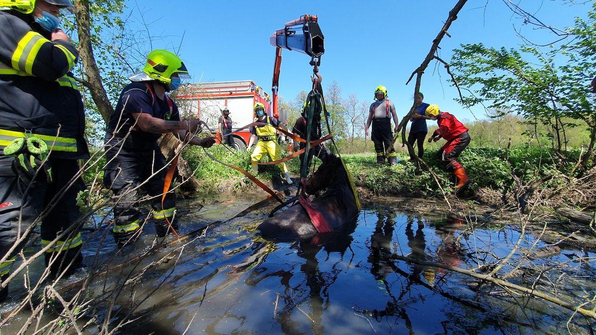 Hasiči na Olomoucku vyprošťovali koně, který uvázl v potoce v bahně