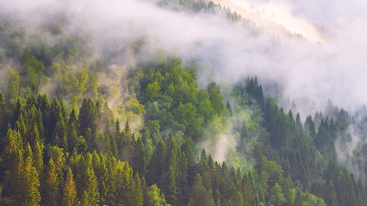 Řetězce Lidl aKaufland bojují proti klimatické změně