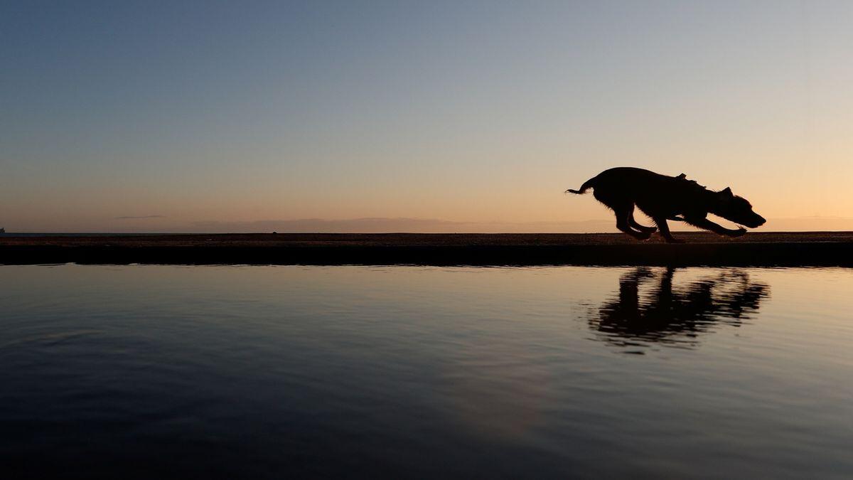 Psi šli s lidmi i do Střední Ameriky. Před 12 tisíci lety