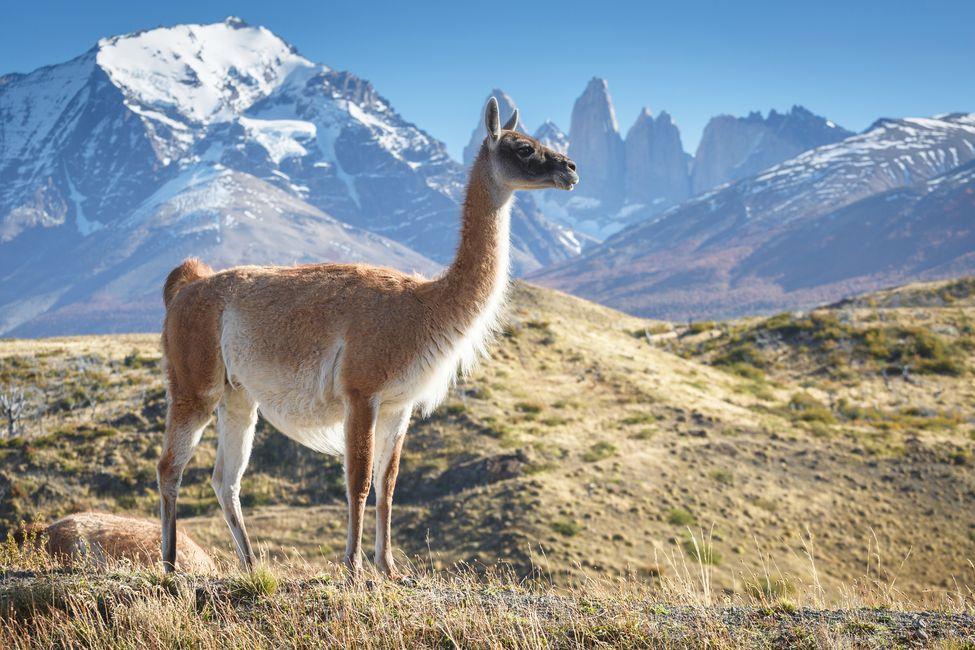 Chile a další jihoamerické státy během podzimu otevřou hranice turistům.
