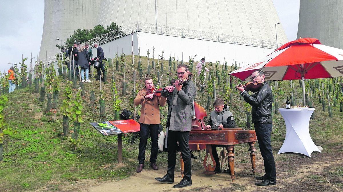 Na Jaderné vinici poprvé sklidili hrozny, vznikne 600 lahví vína