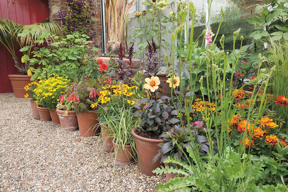 Z tradičních květin podzimu se mohou radovat i ti, kteří zahradničí na balkoně či terase. Nesmí však šidit zálivku ani hnojení!