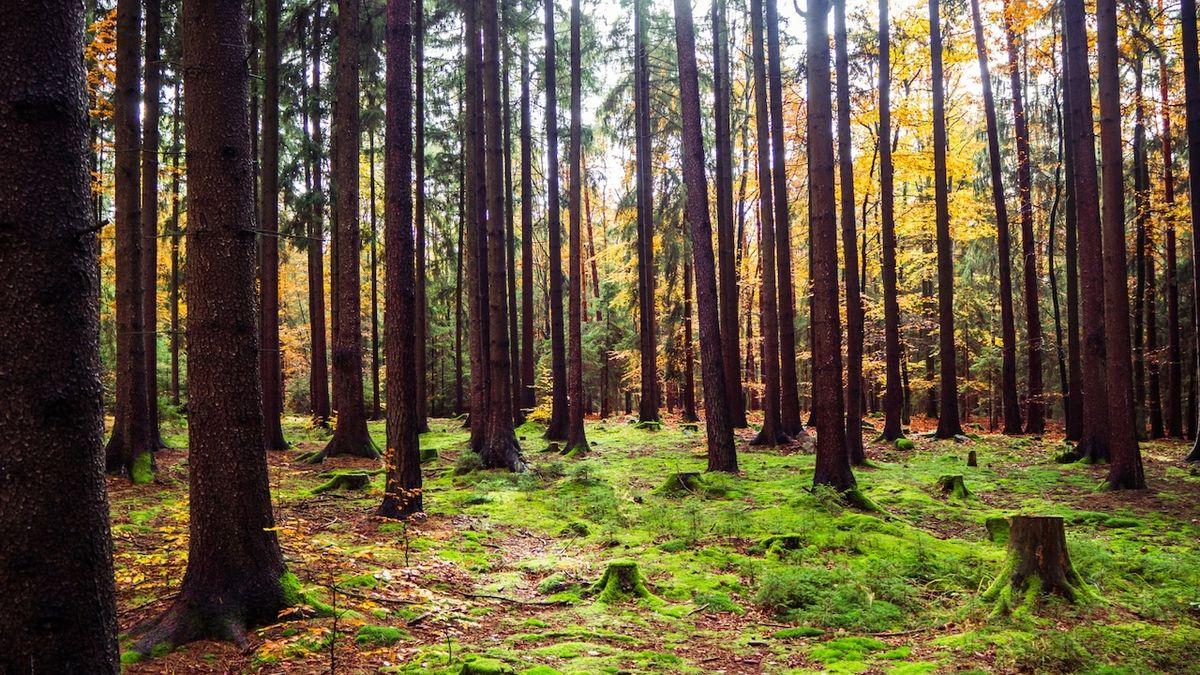 Ministerstva tají, proč si vojenské a státní lesy narychlo prohazují majetek za miliardy