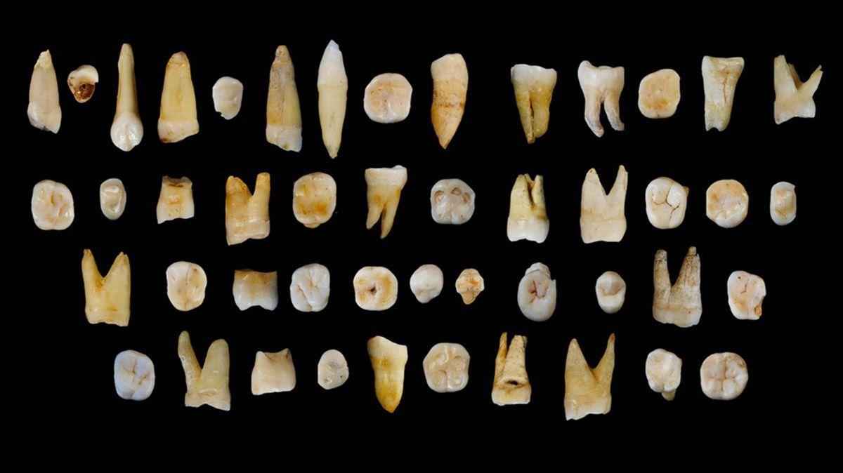 Nepřepisujte evoluci kvůli zubům z čínské jeskyně, vzkazují vědci po nové analýze