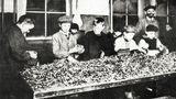 Dětství za Velké války: hlad, zpustlost atěžká práce