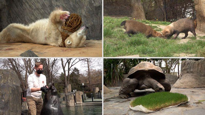 Velikonoční nadílku dostali v pondělí i obyvatelé trojské zoo
