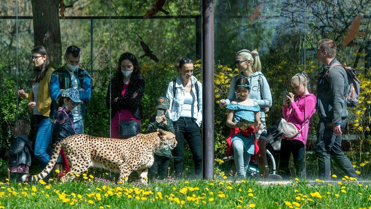 Udělalo se pěkně: Češi vzali zoo útokem, doprava zkolabovala