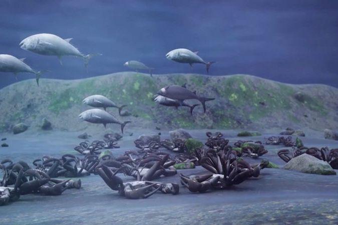 U oregonského pobřeží vznikají obří mrtvé zóny