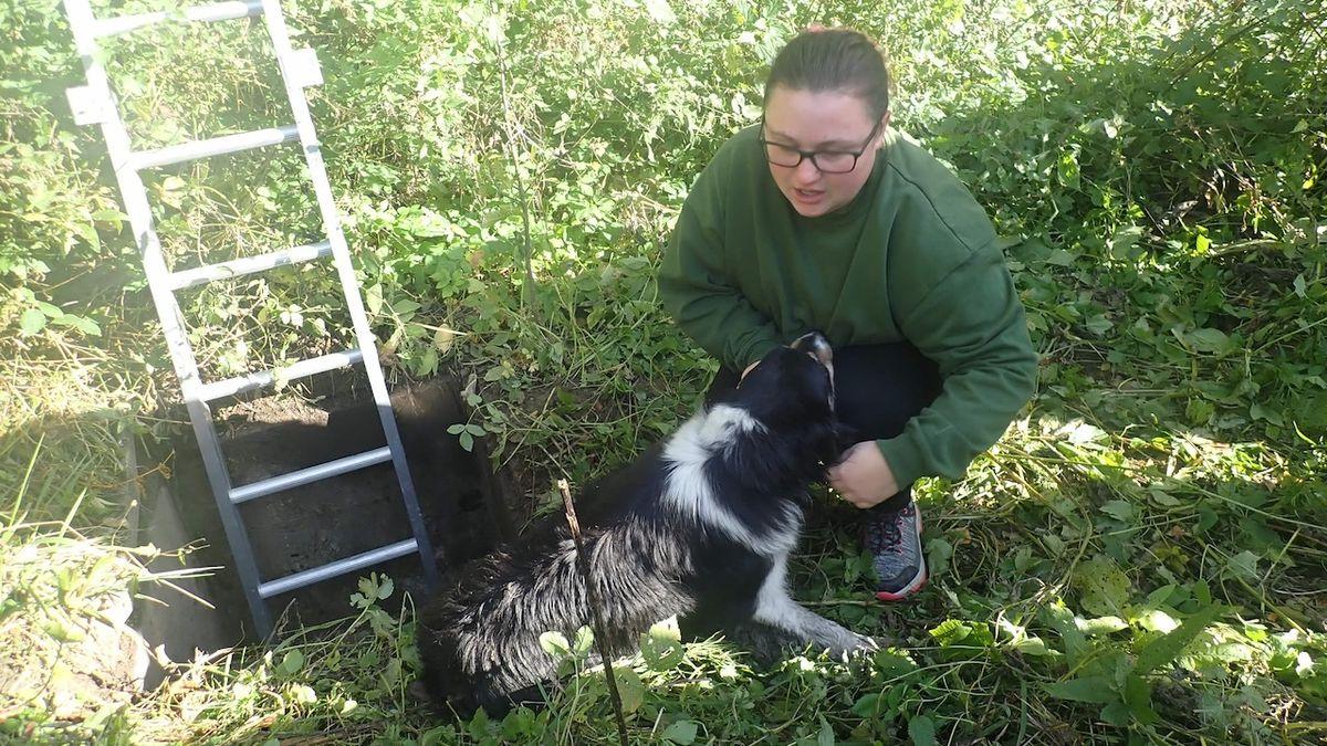 Několik dnů hledali zatoulaného psa. Byl uvězněný v šachtě