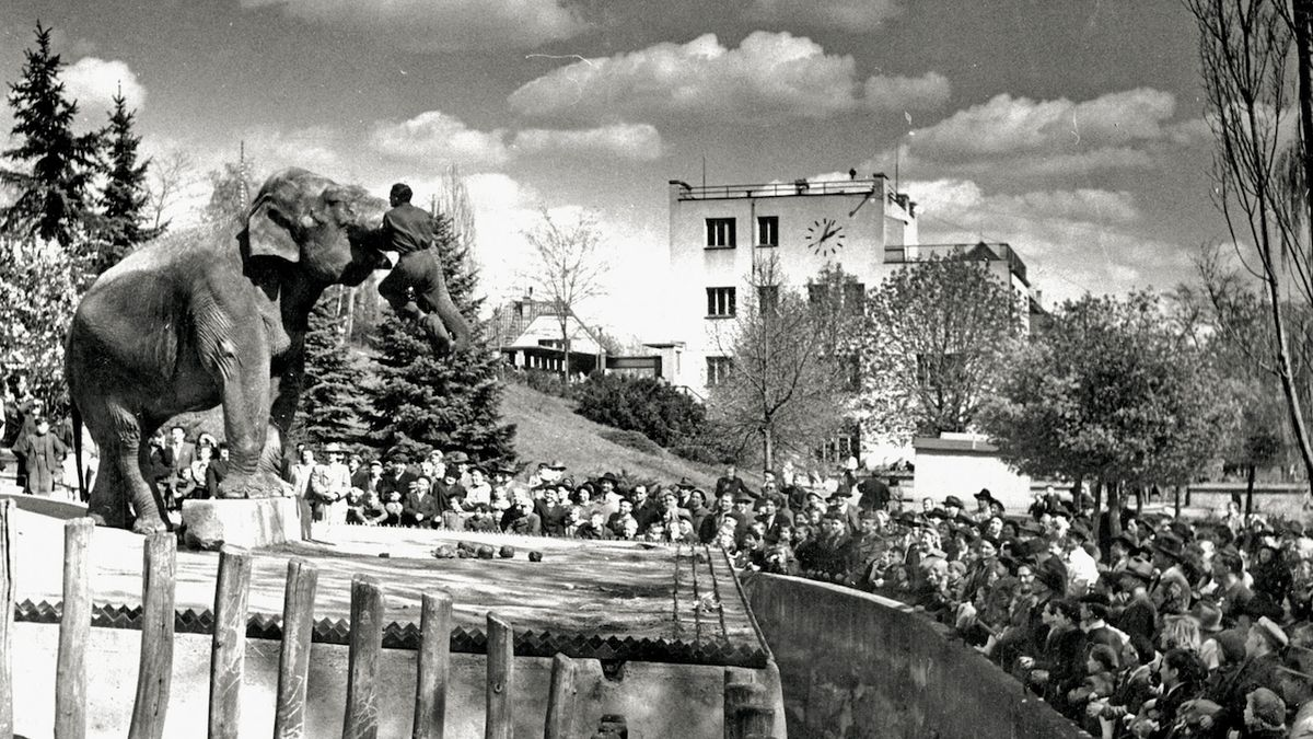 Pražská zoo oslavila devadesátiny ve stylu swingu