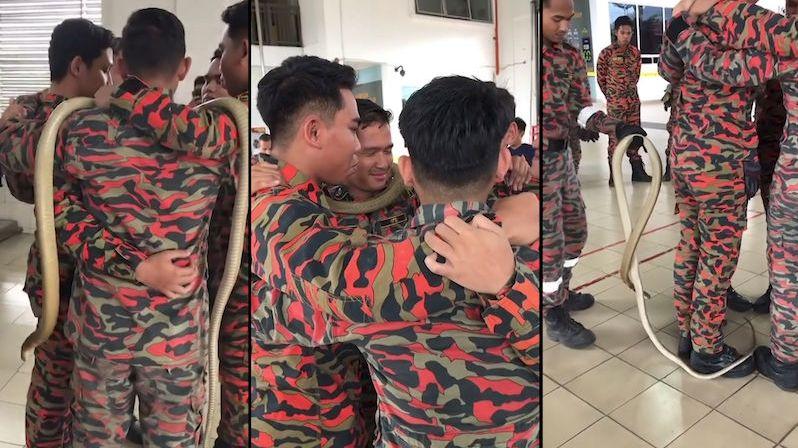 Třímetrová kobra se plazí po ramenou, i tak se cvičí hasiči v Malajsii