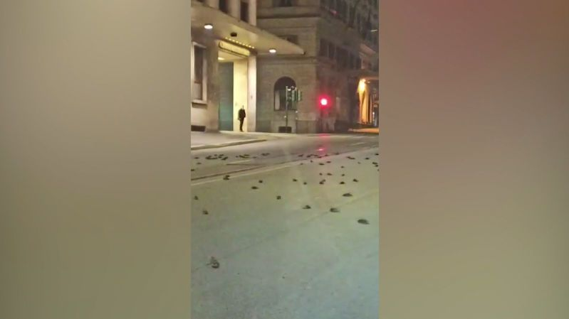 V ulicích Říma byly po silvestrovských ohňostrojích stovky mrtvých ptáků