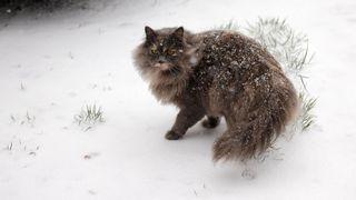 Oblevu vystřídá ochlazení a znovu začne sněžit