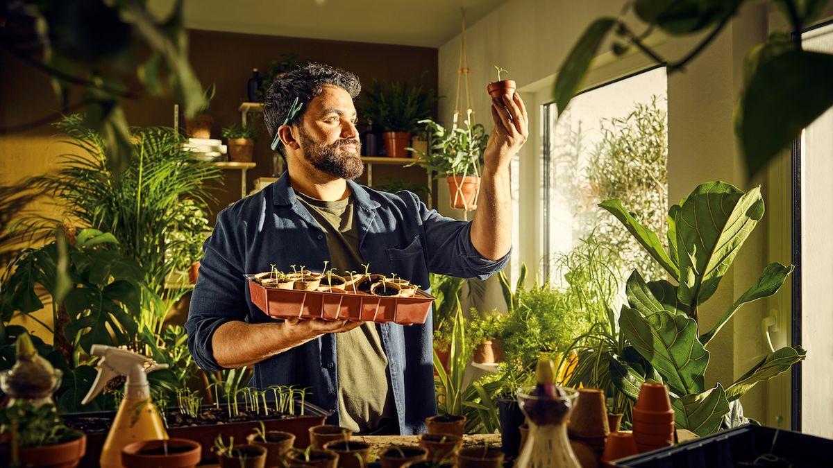 Jak doma pěstovat zeleninu či bylinky ze semínka