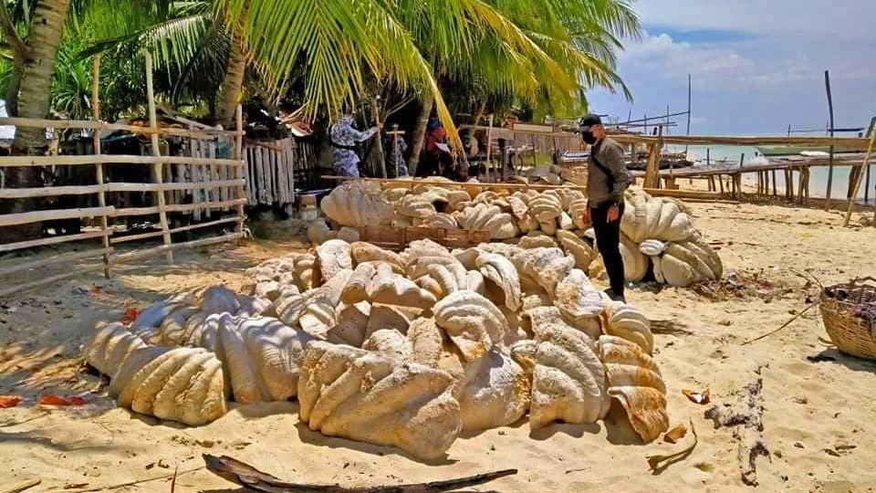 Filipínské úřady zabavily 200 tun zkamenělých škeblí