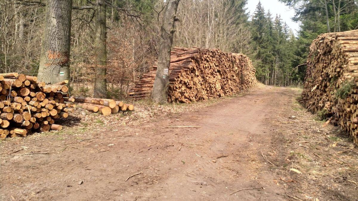 Lesy ČR se loni díky státní podpoře dostaly do zisku