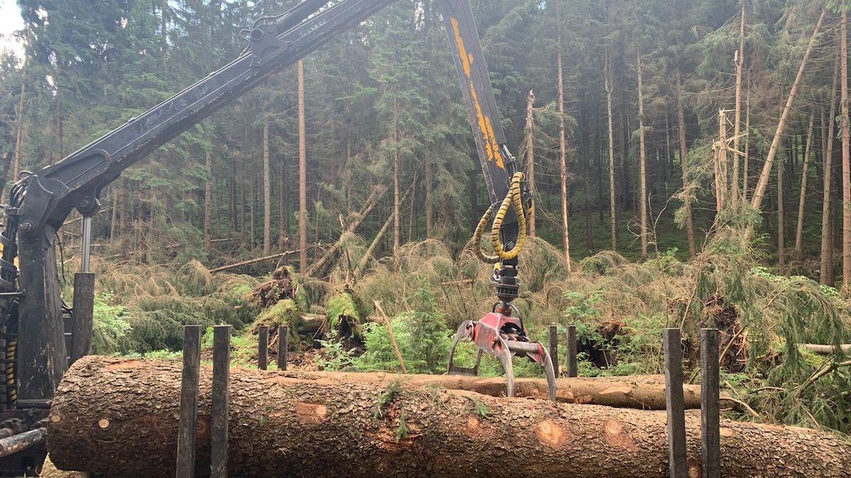 Ochránci přírody sčítají škody, bilance bouřek je hrozivá