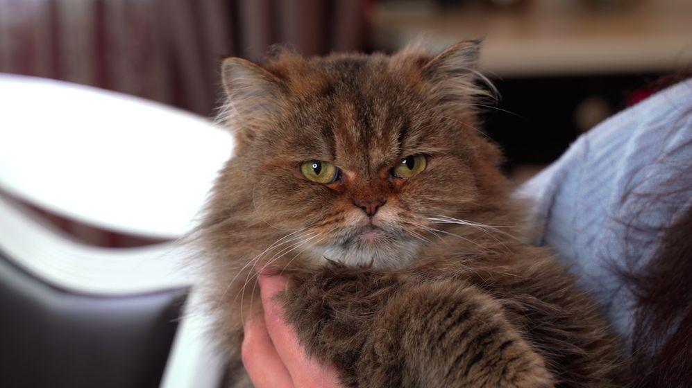 Trpí vaše kočka? Aplikace to zjistí z fotky