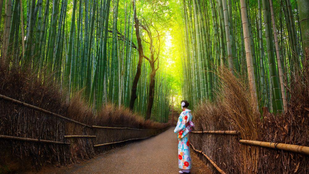 FOTO: Bambusový les Sagano je jedno z nejmagičtějších míst v Japonsku
