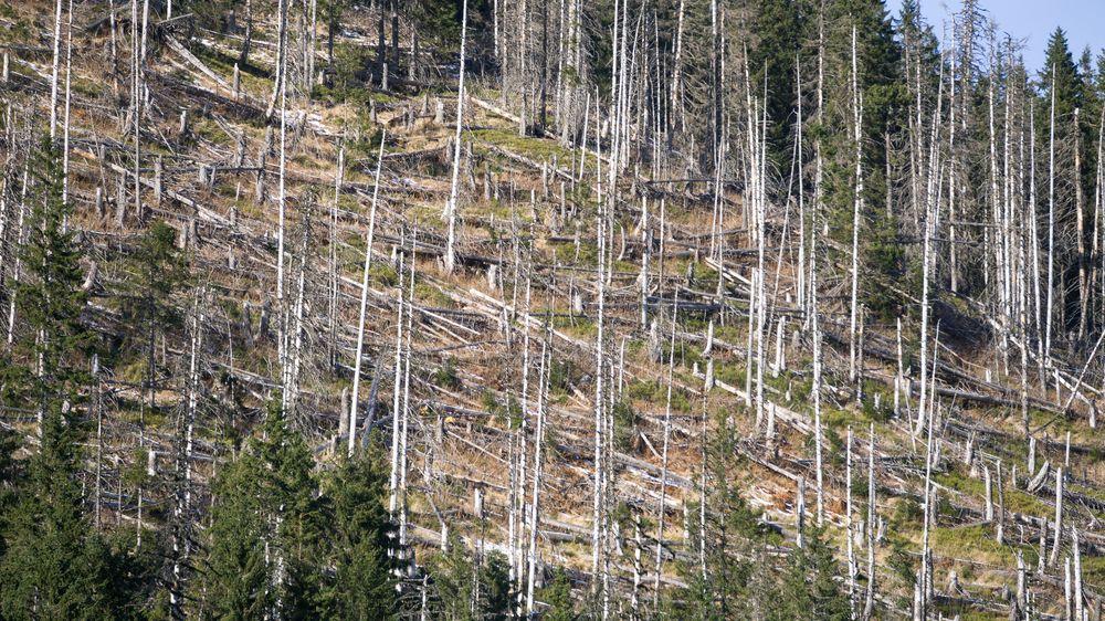 Mrtvé dřevo ročně uvolní uhlík ve výši celosvětových emisí z fosilních paliv