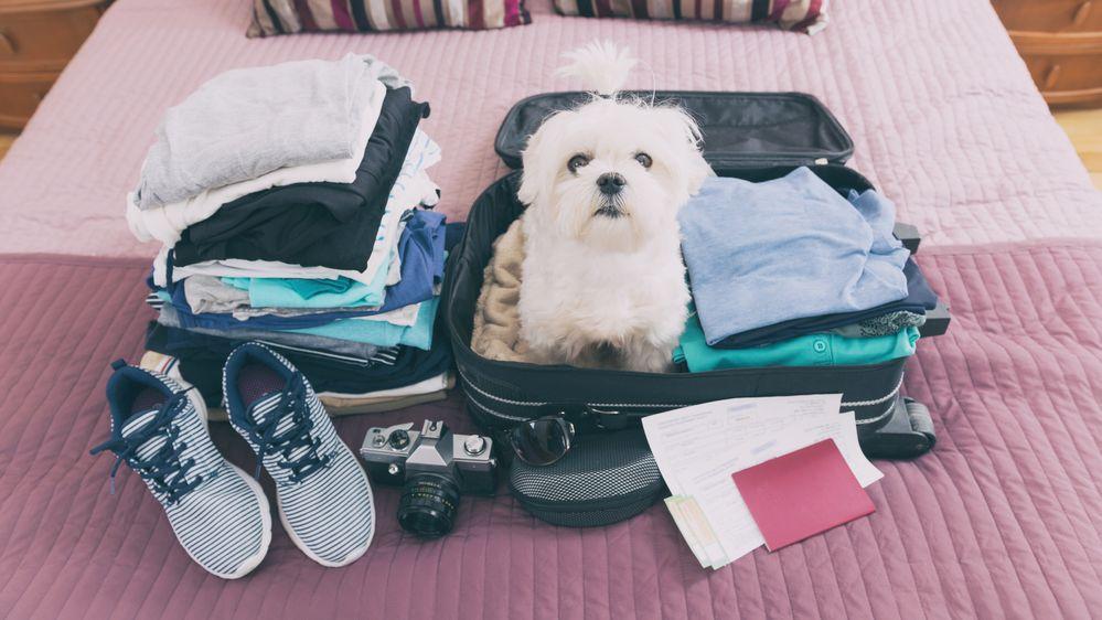 Manžele na letišti překvapilo nadměrné zavazadlo. Schoval se do něj pes