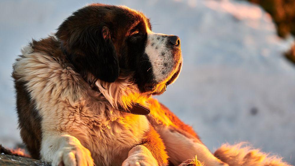 V pondělí utrácíme psa, nemáte někdo sníh? Neobvyklá výzva dojala internet