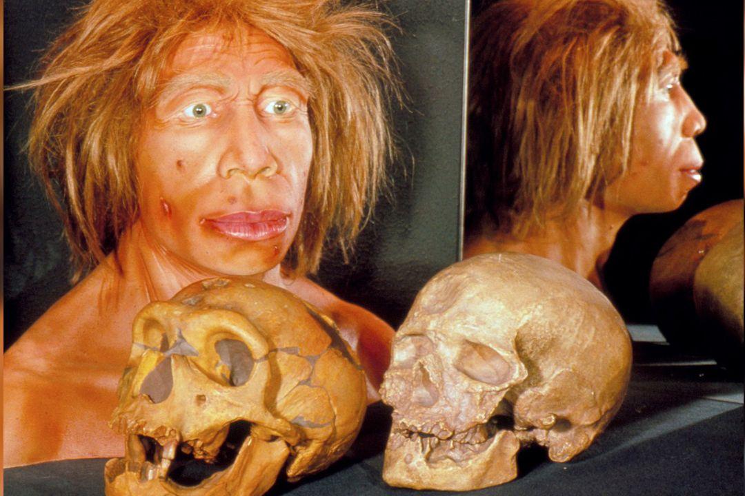 Srovnání koster lebky neandertálce (vlevo) a moderního člověka. Na snímku vidíme i vizualizaci podoby neandertálské ženy.