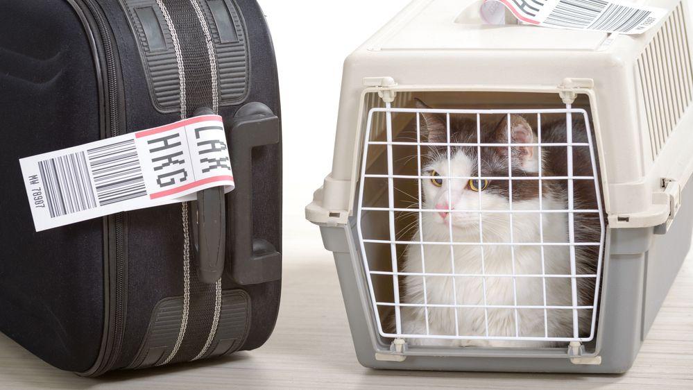 Uprchlá kočka se 11 dní skrývala na newyorském letišti ve stropě