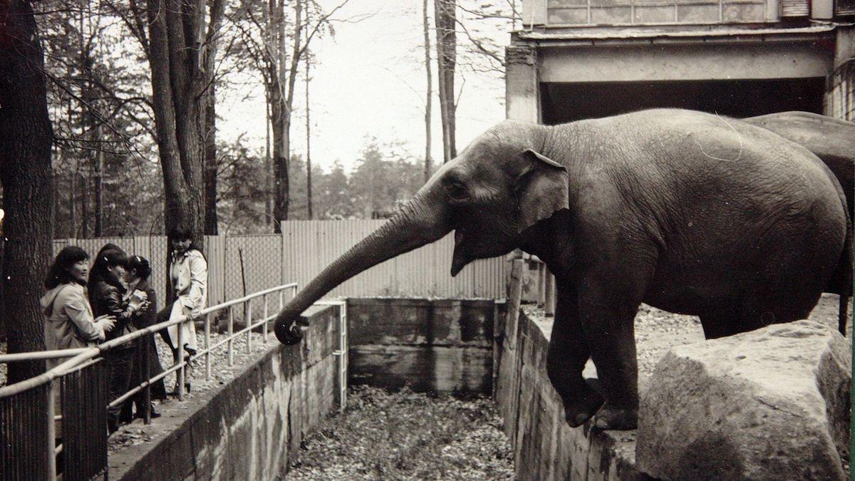 Liberecká zoo přišla o své nejstarší zvíře. Slonici Rání bylo 58 let