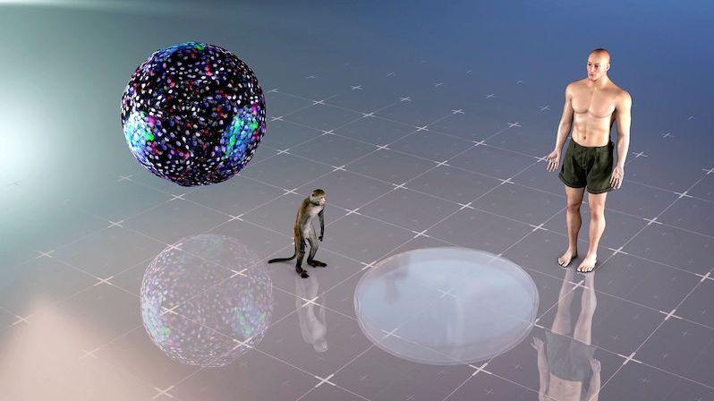 Otevření Pandořiny skříňky? Vědci implantovali lidské buňky do embryí makaků