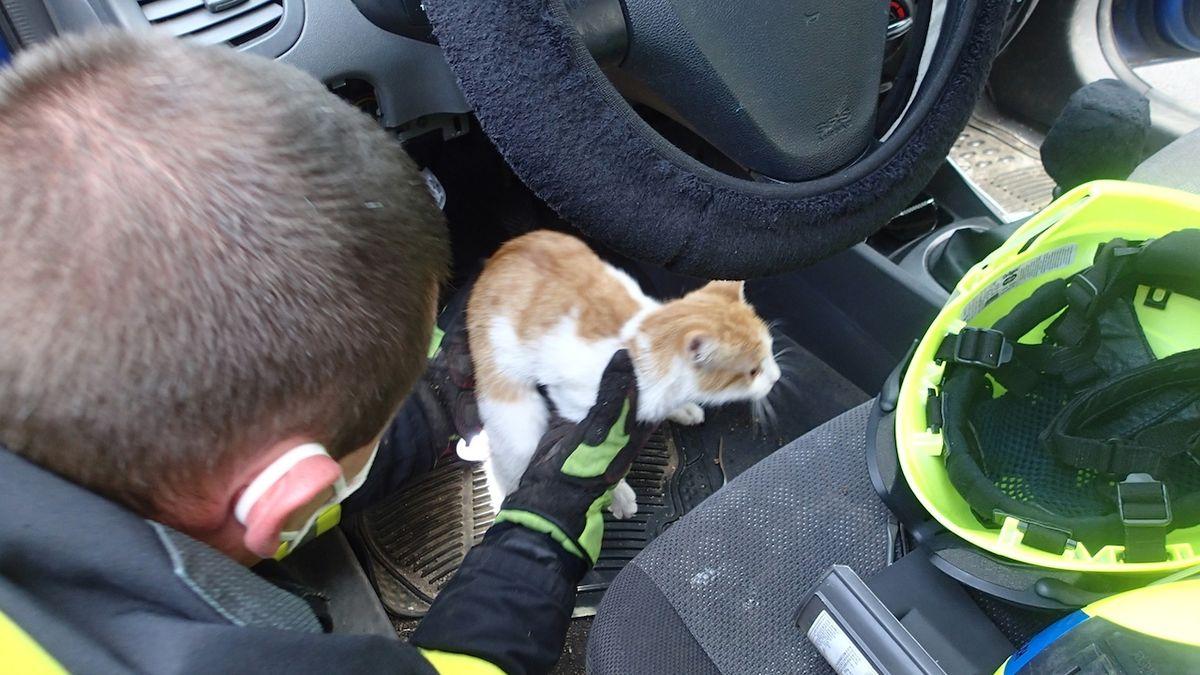 Karlovarští hasiči vyprostili zvědavou kočku. Uvízla mezi pedály auta