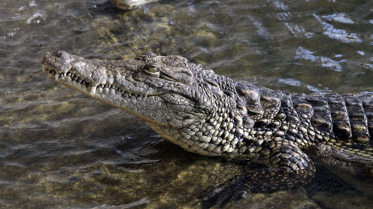 Podmínky pro chov hadů či krokodýlů se zpřísní