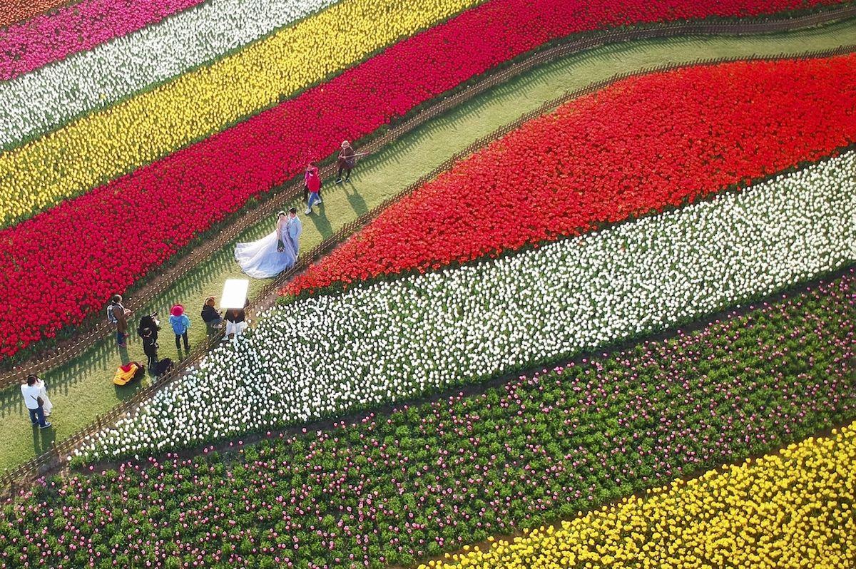 Bezbřehé moře lásky (Dafeng, Čína) - Finalista kategorie Svatba. Unikátní lokace pro tradiční fotky novomanželů uprostřed nádherně udržované zahrady v době rozkvětu.