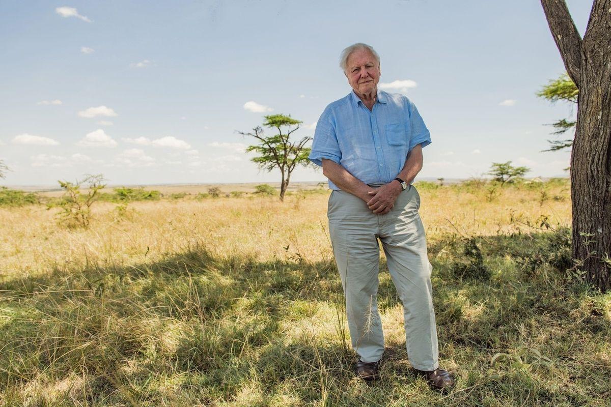 David Attenborough v dokumentárním filmu Život na naší planetě