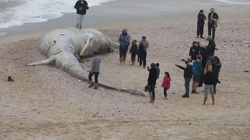 Desítky kilometrů pobřeží Izraele zamořila ropa, nejhorší katastrofa za 40 let