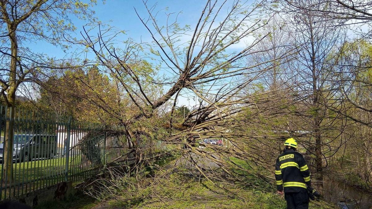 Silný vítr porážel stromy, jeden zranil matku a dítě