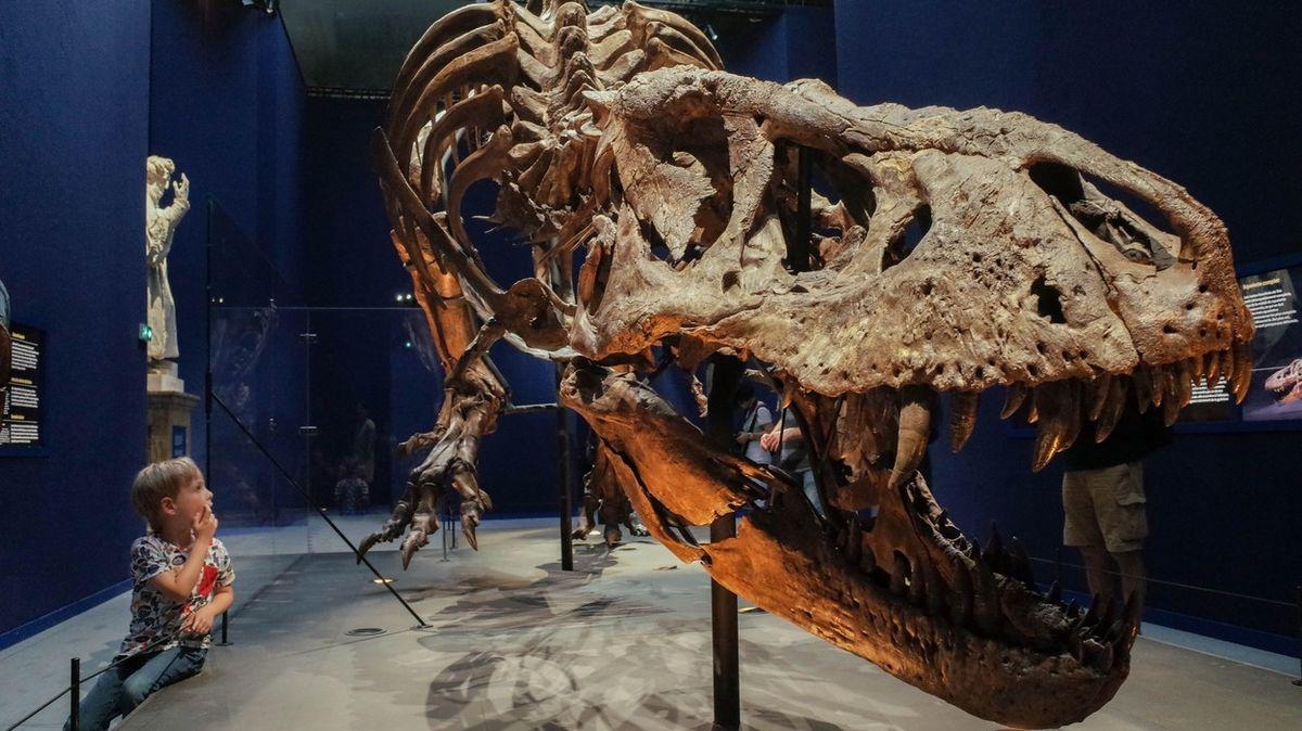 Tyranosauři možná žili ve smečkách jako vlci
