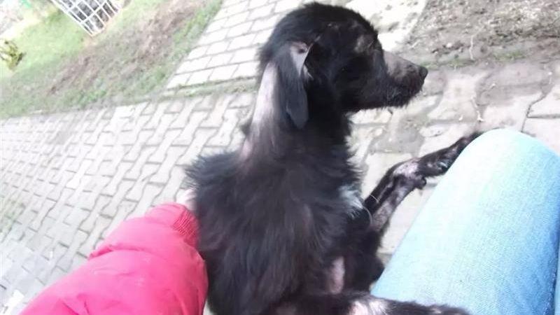Za týrání fenky dostala majitelka podmínku. Dva roky nesmí chovat zvířata