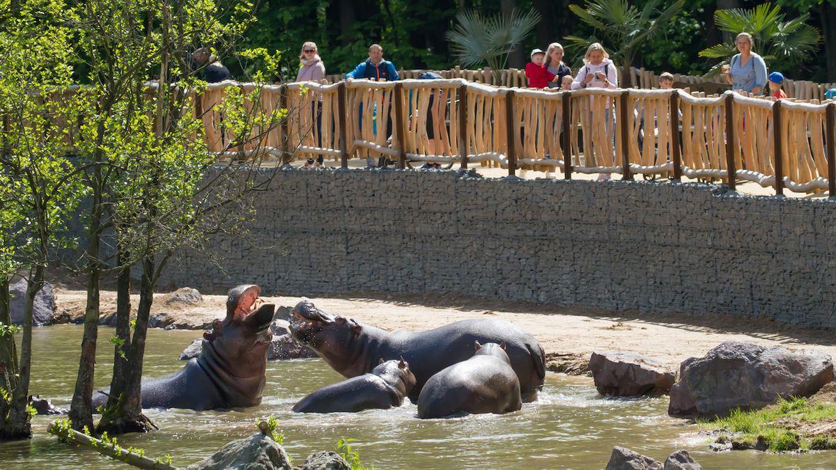 Královédvorský safari park otevřel Jezero hrochů
