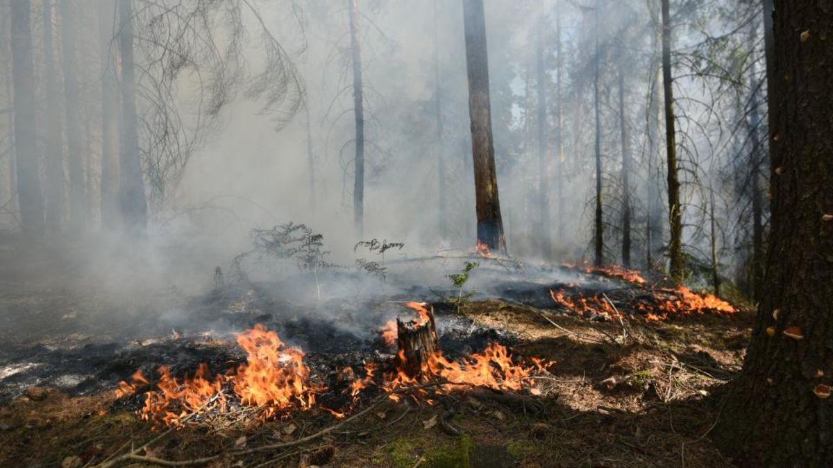 Požár lesa v Českém Švýcarsku dostali hasiči pod kontrolu