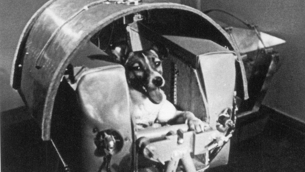 Před 70 lety Sověti tajně vyslali do vesmíru dvojici psů