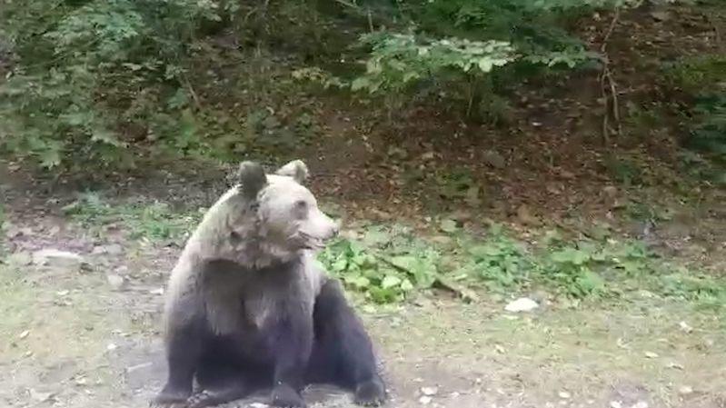 Záběry medvěda, které zalarmovaly policii u Prahy, byly natočeny jinde