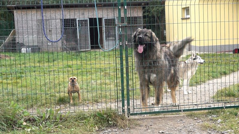 Miniazyl Voříškov pomáhá problémovým psům nalézt trvalý domov. Podporu získávají i díky sbírce