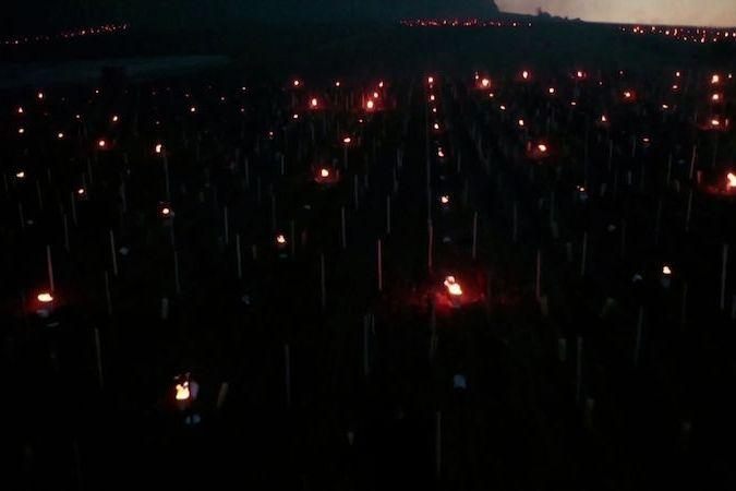 BEZ KOMENTÁŘE: Úrodu Chablis zachraňují ve Francii svícemi