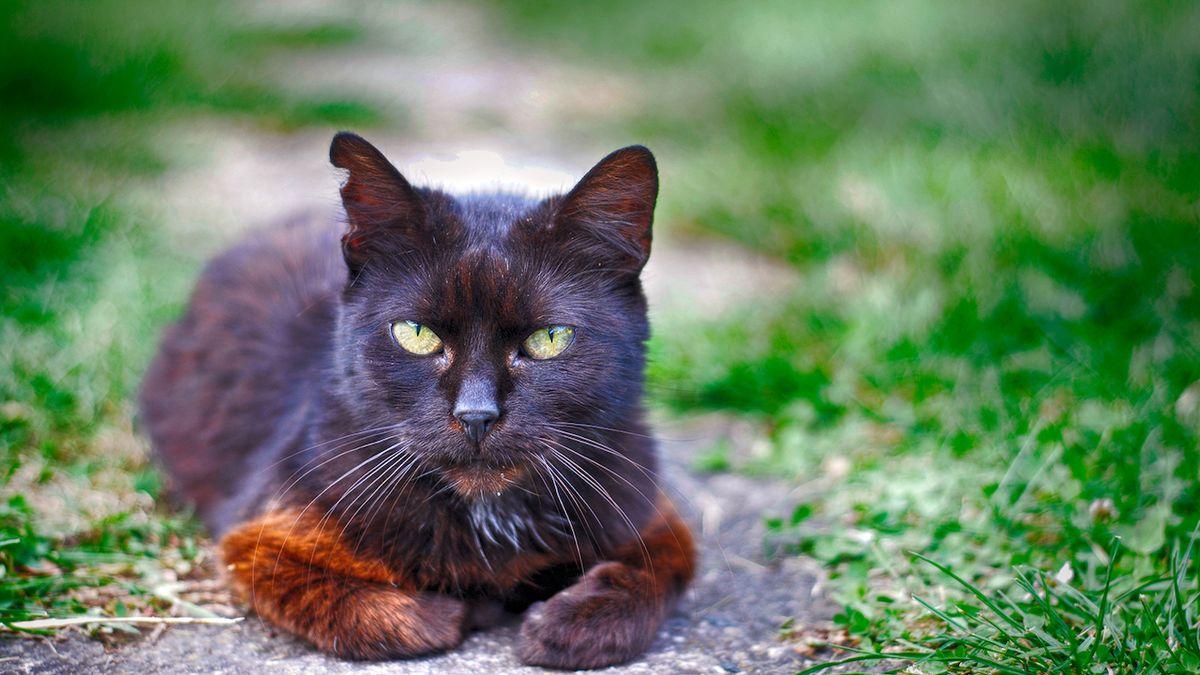 Neznámý tyran střílí v Kopřivnici po kočkách